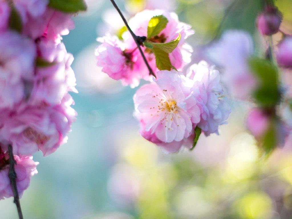 un_blossom-min