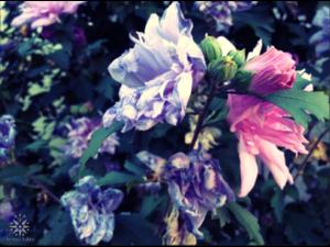 blueflower_490