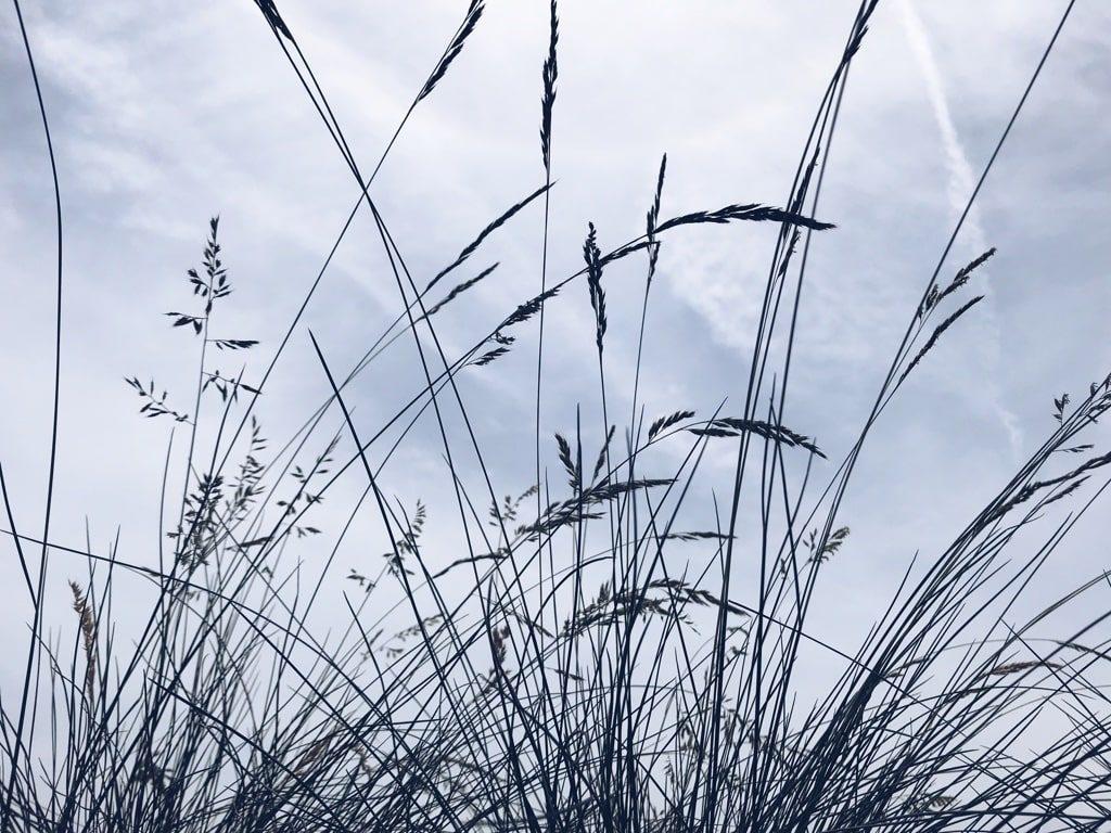 草から見える空