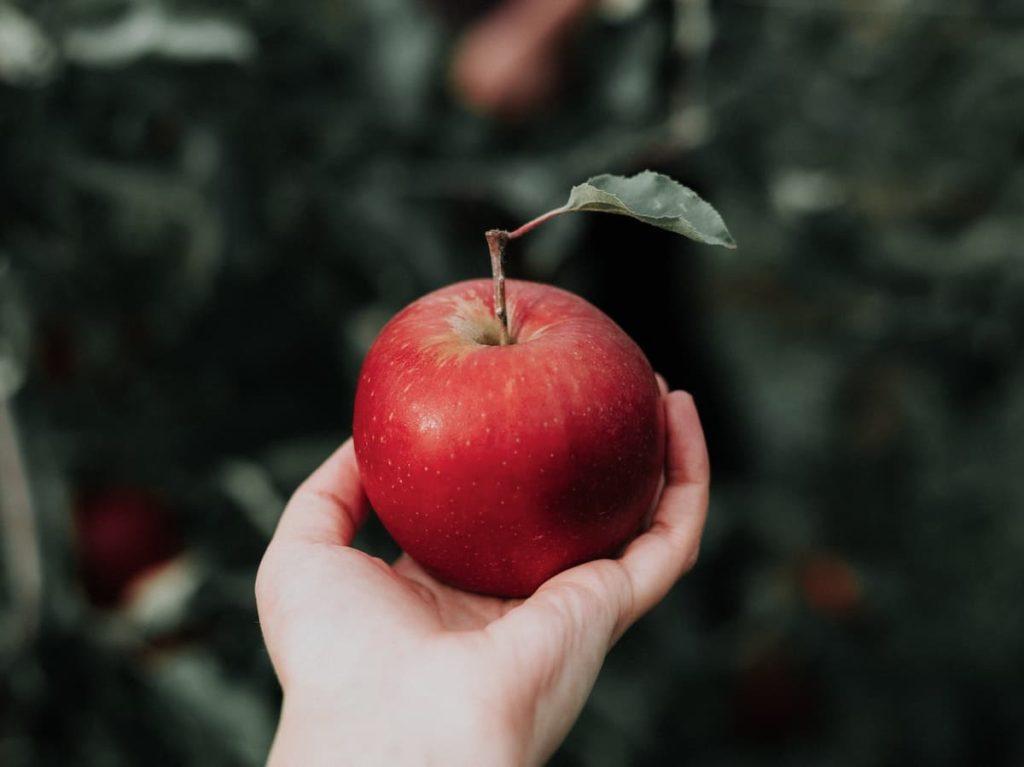 重力,万有引力のりんご